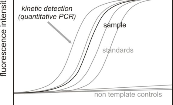 Real-time PCR Analysis